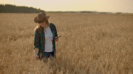 документация : Young woman farmer working with tablet in field at sunset. The owner of a small business concept