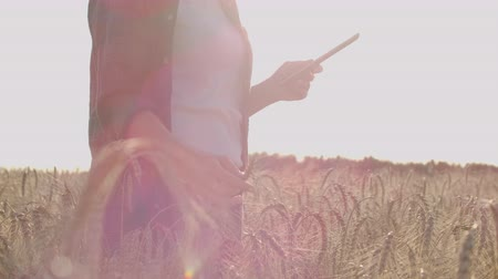 korpa : Close-up of womans hand running through organic wheat field, steadicam shot. Slow motion. Girls hand touching wheat ears closeup. Sun lens flare. Sustainable harvest concept