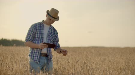 verim : A man in a hat and jeans with a tablet in cancer touches and looks at the sprouts of rye and barley, examines the seeds and presses his finger on the touchscreen at sunset