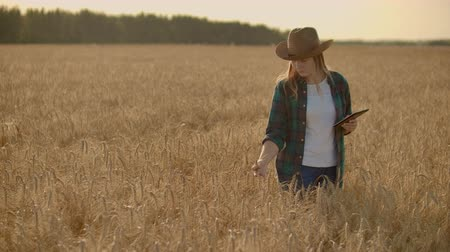 sentir : Close-up of a woman farmer walking with a tablet in a field with rye touches the spikelets and presses her finger on the screen, vertical Dolly camera movement. The camera watches the hand