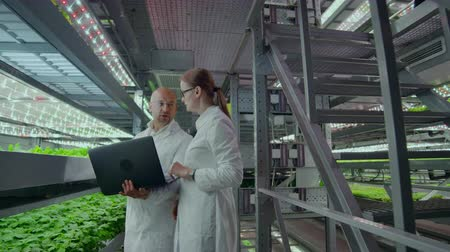iceberg : Two scientists with a laptop in the hands of men and women discussing the results of biological research on a modern vertical farm. Stock Footage