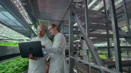 értékelés : modern Microbiology laboratory, two scientists with a laptop discussing the results of research on genetically modified products.