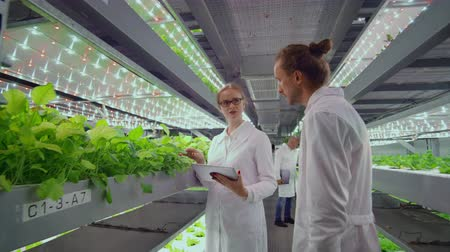 оценка : Project Manager - growing organic vegetables monitors the work of employees and polls the results of the harvest. Camera follow the head. Стоковые видеозаписи