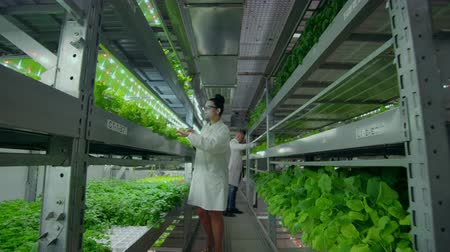 scrutiny : the camera moves along the corridor, the vertical firm follows the scientist from the back, a group of scientists agronomists investigate, touch hands and discuss the results of the grown plants. Stock Footage
