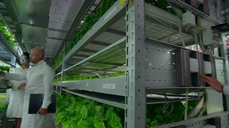 inovador : reverse camera movement along the corridor, a modern vertical farm with hydroponics, scientists in white coats, engaged in the cultivation of vegetables and plants.