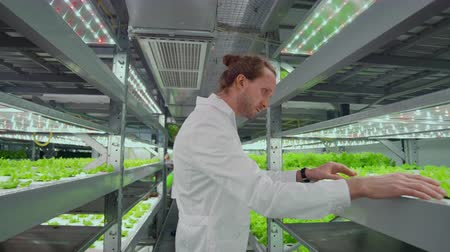 değerlendirme : the reverse movement of the camera along the corridor, a modern farm, scientists in white coats inspect, touch the green plants. Stok Video