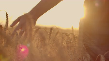 rolnik : A female farmer in a plaid shirt with a tablet computer in her hands is walking across a wheat field at sunset, checking. The quality and maturity of the crop. Wideo