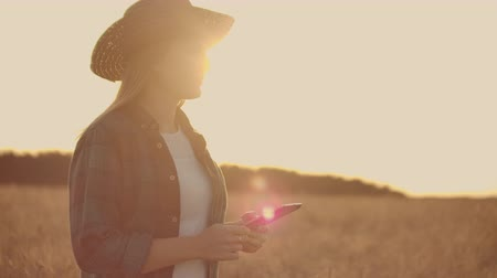 plucks : Young woman farmer in wheat field on sunset background. A girl plucks wheat spikes, then uses a tablet. The farmer is preparing to harvest. Stock Footage