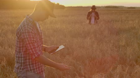 otruby : Farmers man and woman in hats and tablets at sunset in a wheat field and shirts inspect and touch the grain and wheat germ hands