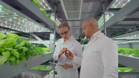 dieselmotor : Biologist puts sprout in test tube for laboratory analyze. Two scientists stand in greenhouse. They are dressed in white uniform, disposable gloves and eye. Stockvideo