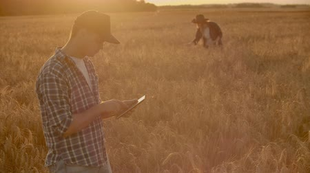 klec : Two farmers, a man and a woman, are looking forward to the sunset over a field of wheat. Teamwork in agribusiness.