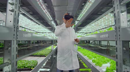 hydroponic : Male farmer biologist in a white robe standing in the hallway of vertical farming with hydroponics with glasses virtualnoy reality around the green showcases with vegetables Stock Footage