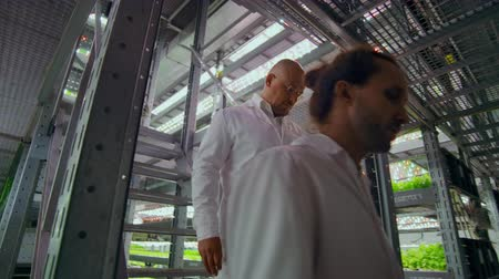 scrutiny : modern farms for growing organic products of the future. two men go down the stairs of a vertical farm with a tablet computer in their hands and 2 women inspect samples of manufactured products