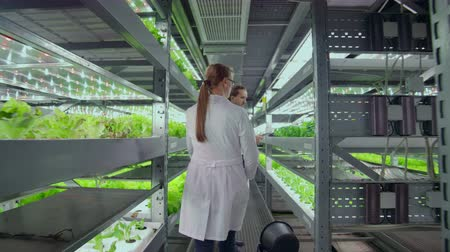 dikkatli inceleme : The camera moves through the corridors of a modern metal farm for growing vegetables and herbs, a team of scientists using computers and modern technology controls the growth and health of the crop