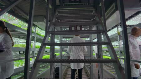 scholar : Scientists and farmers work together in a team to create clean plants in an artificial environment using modern technology laptops and tablets Stock Footage