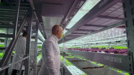 innovare : Team work of scientists and farmers men and women using modern technology and hydroponics. The business of growing vegetables and salads in a bad environment. The concept of eco-friendly products