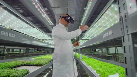 analista : Vertical hydroponic plantation of a man in a white coat using virtual reality technology simulating the operation of the interface Archivo de Video