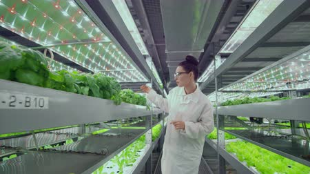 dikkatli inceleme : The camera moves through the corridors along the shelves with vegetables and herbs on a modern farm, a team of scientists and farmers monitor the work of the station