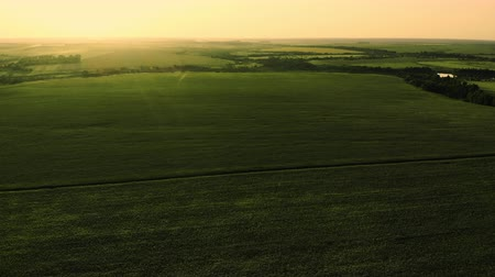 lehkost : A Flight Over An Endless Green Field. Aerial.