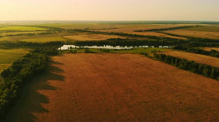 Aerial photography field at sunset, wheat field, green fields, field of sunflowers and corn. Agriculture. Stok Video