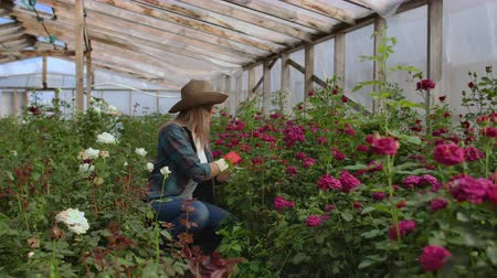 virágárus : Girl florist in a flower greenhouse sitting examines roses touches hands smiling. Little flower business. Woman gardener working in a greenhouse with flowers.