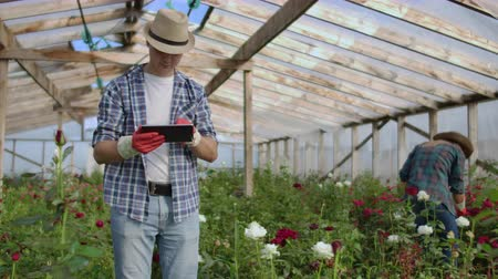 flowerpots : Two happy farmers working in a greenhouse with flowers using tablet computers to monitor and record crops for buyers and suppliers of flowers to shops, a small business, and colleagues working Stock Footage