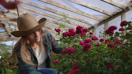 scones : Girl florist in a flower greenhouse sitting examines roses touches hands smiling. Little flower business. Woman gardener working in a greenhouse with flowers.