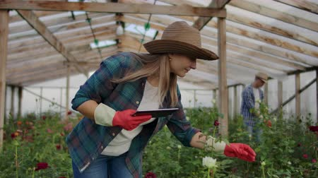 repartidor : Two happy farmers working in a greenhouse with flowers using tablet computers to monitor and record crops for buyers and suppliers of flowers to shops, a small business, and colleagues working Archivo de Video