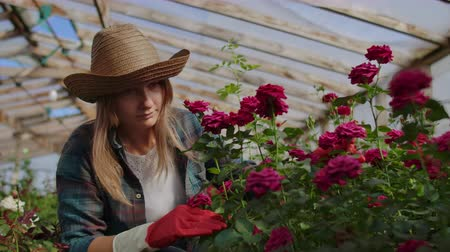 kankalin : A young woman florist takes care of roses in a greenhouse, sitting in gloves, examining and touching flower buds with her hands. Stock mozgókép