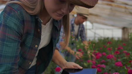 горшках : A woman with a tablet examines the flowers and presses her fingers on the tablet screen. Flower farming business checking flowers in greenhouse.