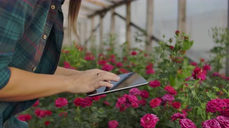 floweret : Close-up tablet in the hand of a woman florist in a greenhouse growing roses in slow motion. Small business.
