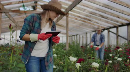 горшках : Modern rose farmers walk through the greenhouse with a plantation of flowers, touch the buds and touch the screen of the tablet