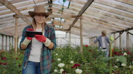 csöves virág : Team work of colleagues modern rose farmers walk through the greenhouse with a plantation of flowers, touch the buds and touch the screen of the tablet
