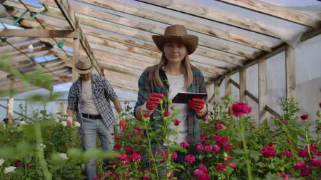 горшках : Team work of colleagues modern rose farmers walk through the greenhouse with a plantation of flowers, touch the buds and touch the screen of the tablet