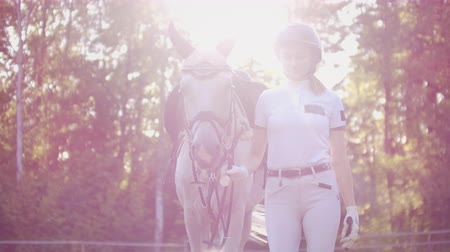 salto ostacoli : Enjoyable sunny day from horsewomen and her horse