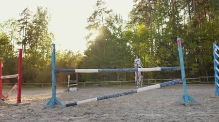 podkowa : Show jumping in the horse club