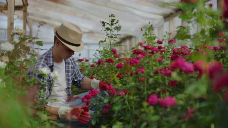 střih : Beautiful male florist in apron and pink gloves standing and happily working with flowers in greenhouse