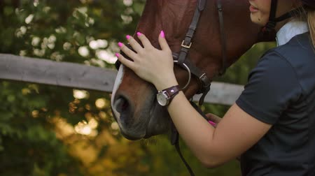 oddanost : Girl is enjoying her time with a horse before training
