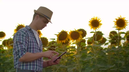 botanikus : The farmer with a tablet on a sunflower field in summer day