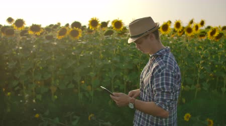 botanikus : The young male walks on the sunflowers field in summer day