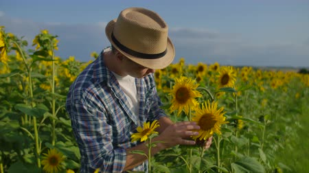 botanikus : The farmer is watching on the sunflowers