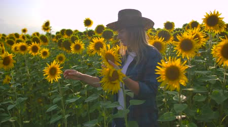 botanikus : The woman is watching on the sunflowers