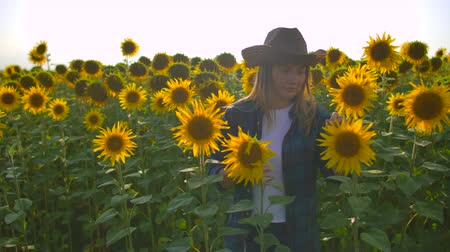 botanikus : The girl is watching on the sunflowers Stock mozgókép