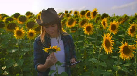 botanikus : The farmer girl is watching on the sunflowers Stock mozgókép