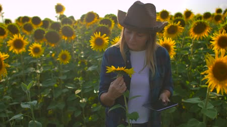 botanikus : The female student describes sunflowers