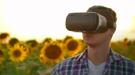 artificial flower : A young man inspects a field with sunflowers in virtual reality glasses in sunny day. These are modern technologies in summer evening