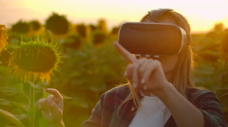 zonnebloemen : The girl farmer manager is working in VR glasses in summer evening in nature