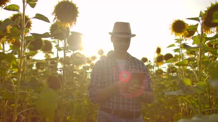 agronomist : The farmer uses modern technology in the field. A man in a hat goes into a field of sunflowers at sunset holding a tablet computer looks at the plants and presses the screen with his fingers.