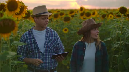 документация : Two farmers a man and a woman using a tablet computer in a field with sunflowers at sunset estimate the harvest and profit from their business. Family business. the concept of modern farmers Стоковые видеозаписи