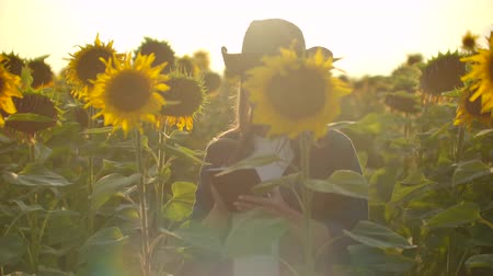 field study : The young botanists is observing sunflowers in summer day on the field